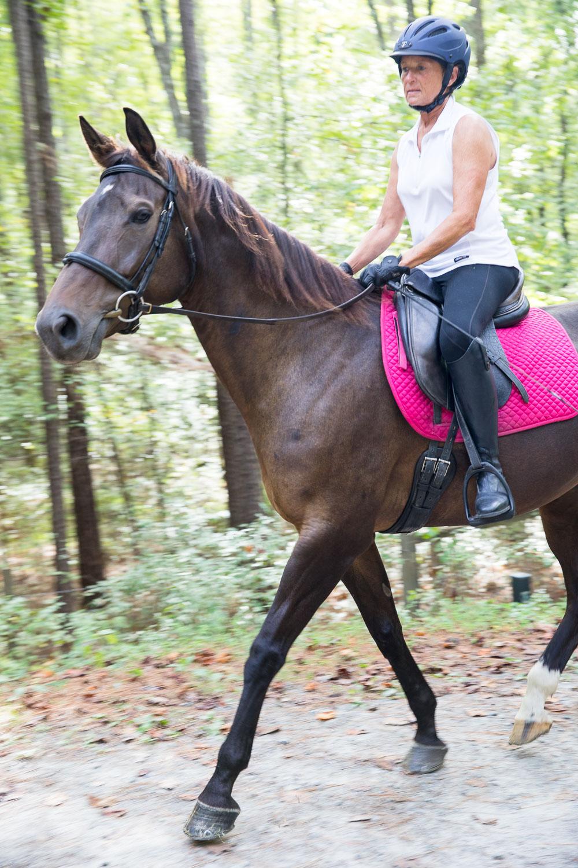 ATT_horses-9.jpg