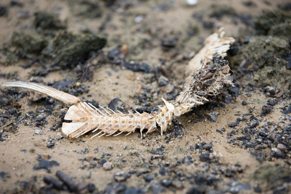 Jordan Lake dead fish