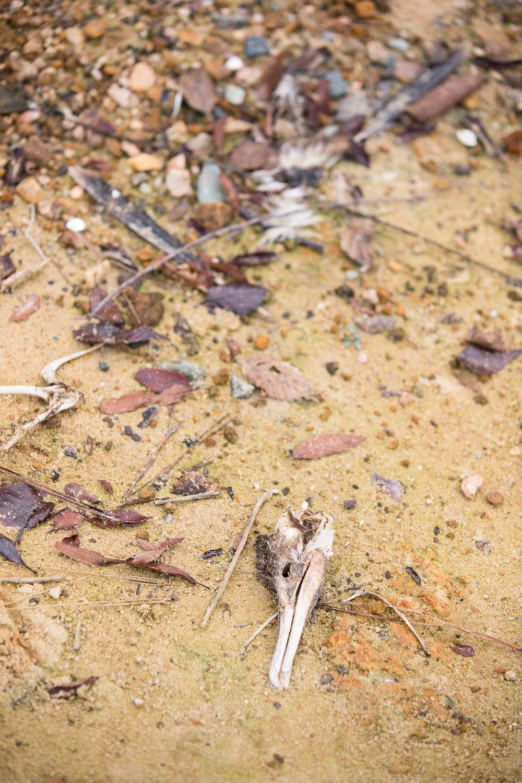 Jordan Lake dead bird