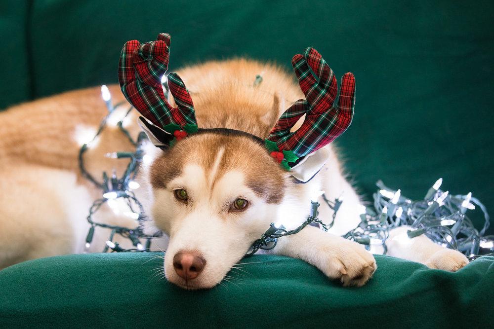 Ryder_Christmas-1.jpg
