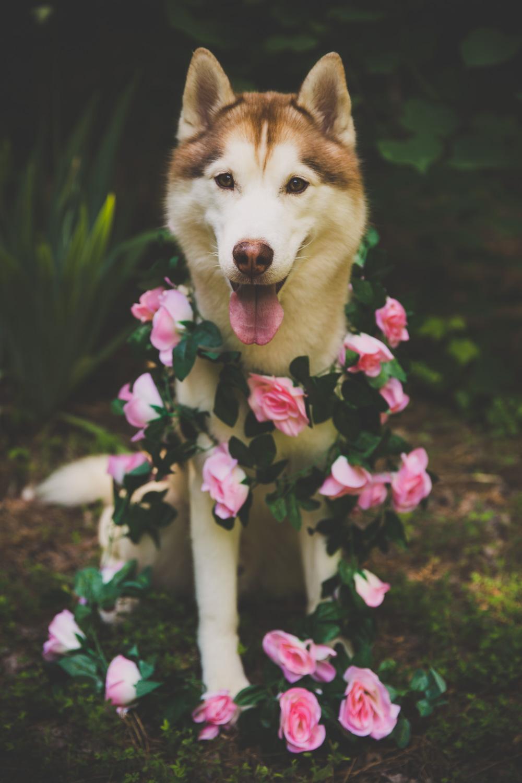 June 2018 Goals - Ryder Dressed in Florals