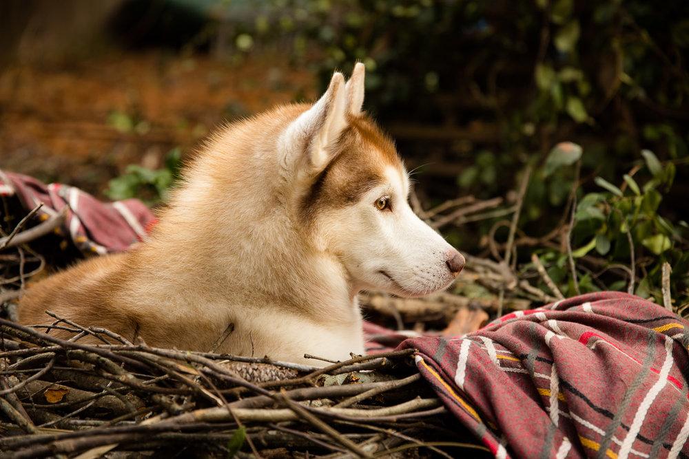 Ryder Bird Dog