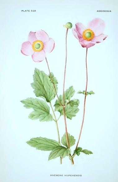 Anemone Plate.jpg