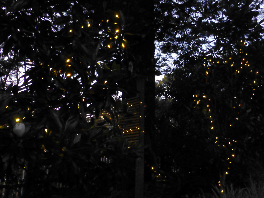 Fairy lights in the garden add some twinkle to the occasion