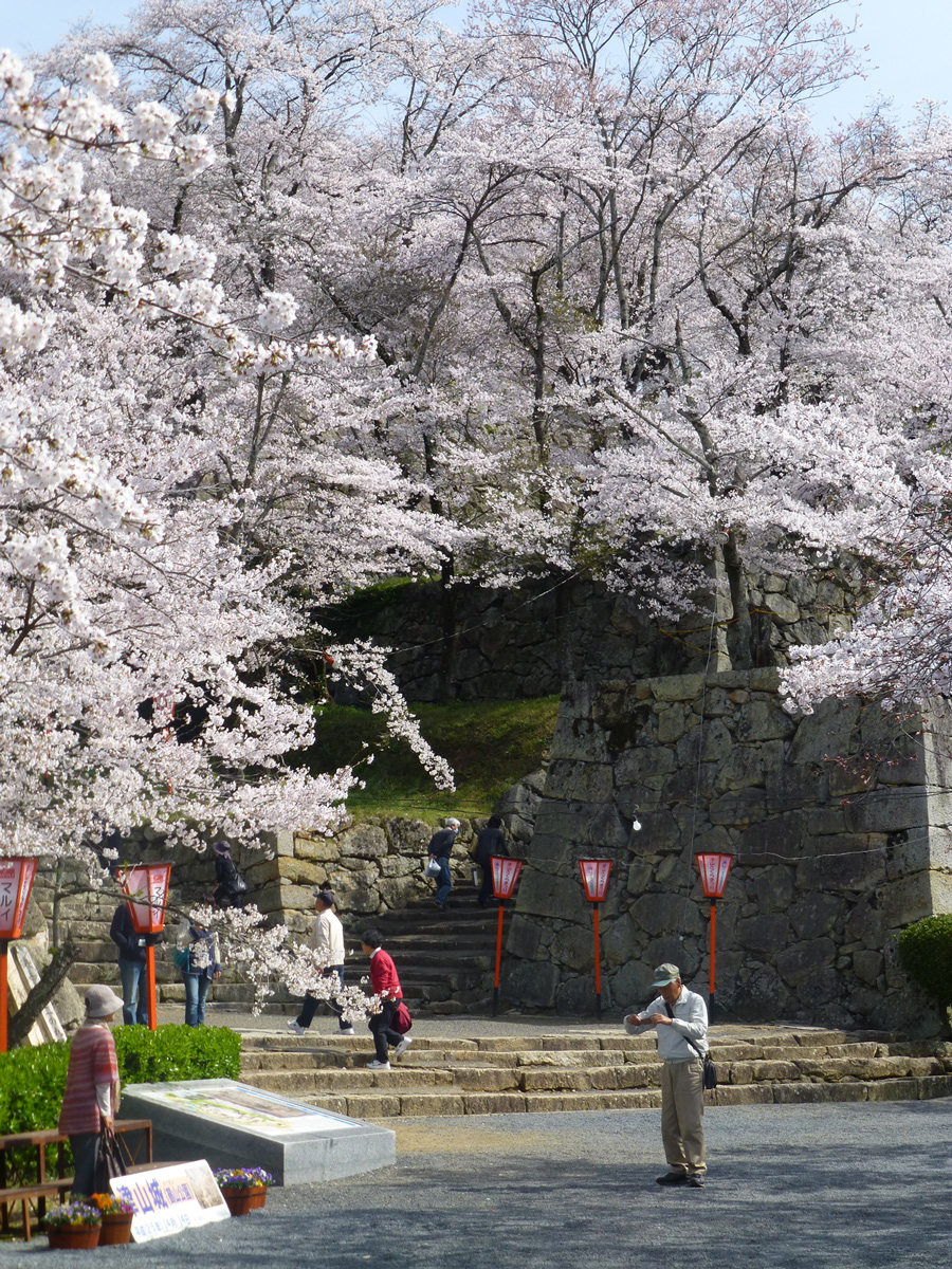 tsuyama-hanami3.jpg