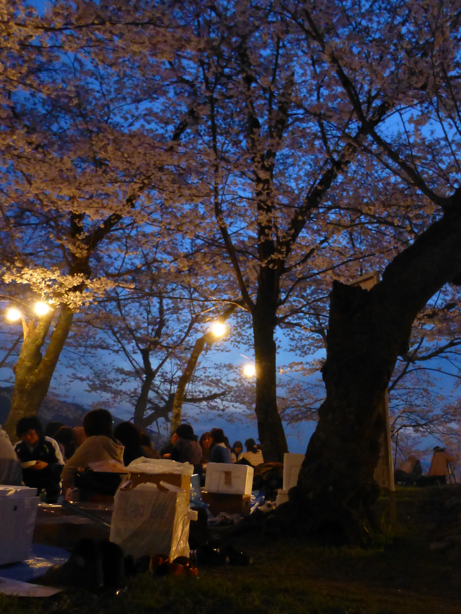 The hanami picnic atmosphere is now in full swing.