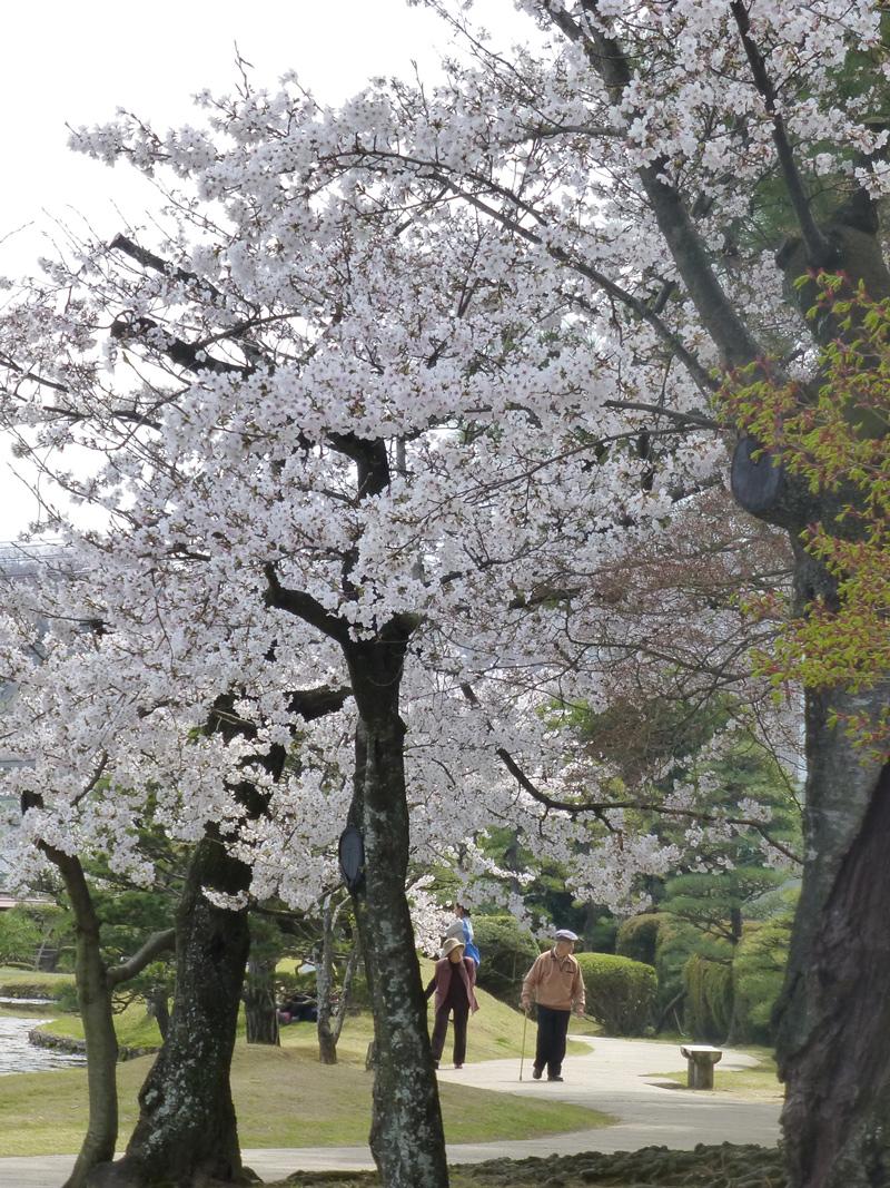 Tsuyama-garden-1.jpg