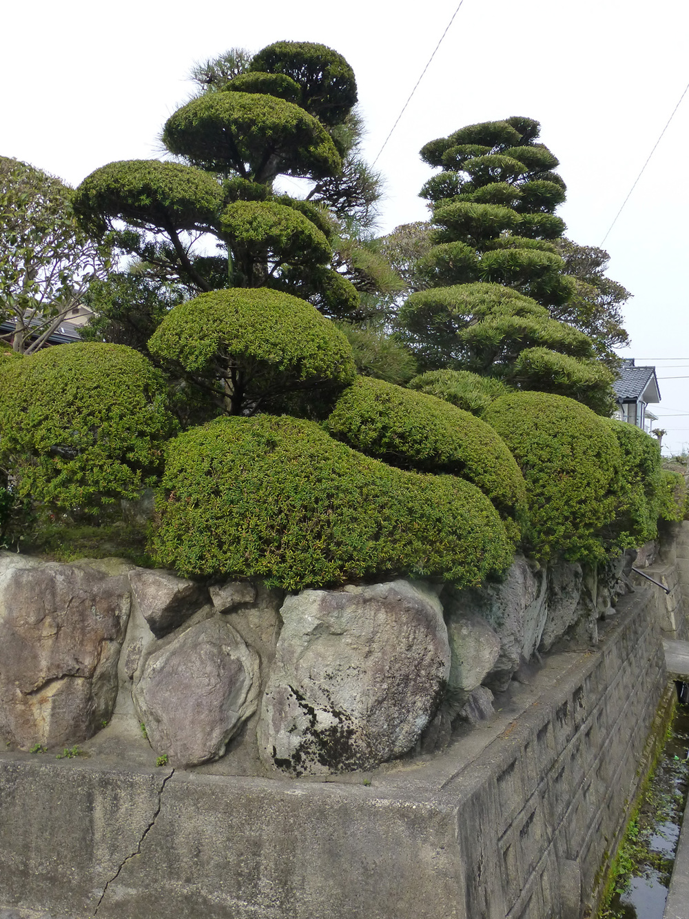 Tsuyama-walk3.jpg