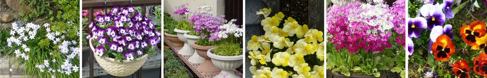 tsuyama-flower-row.jpg