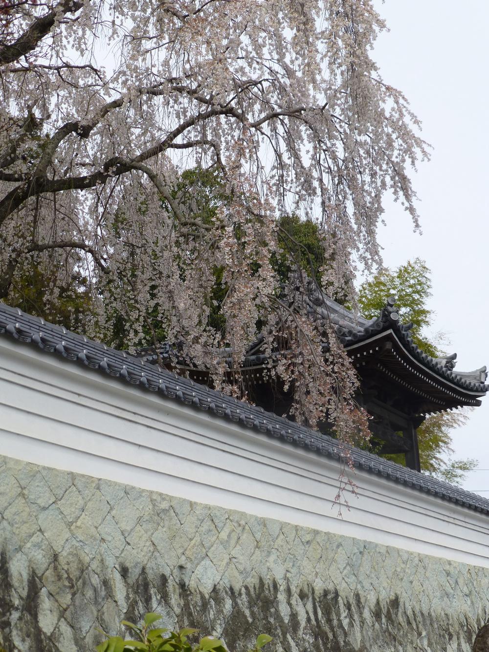 Tsuyama-walk-cherrytemple1.jpg