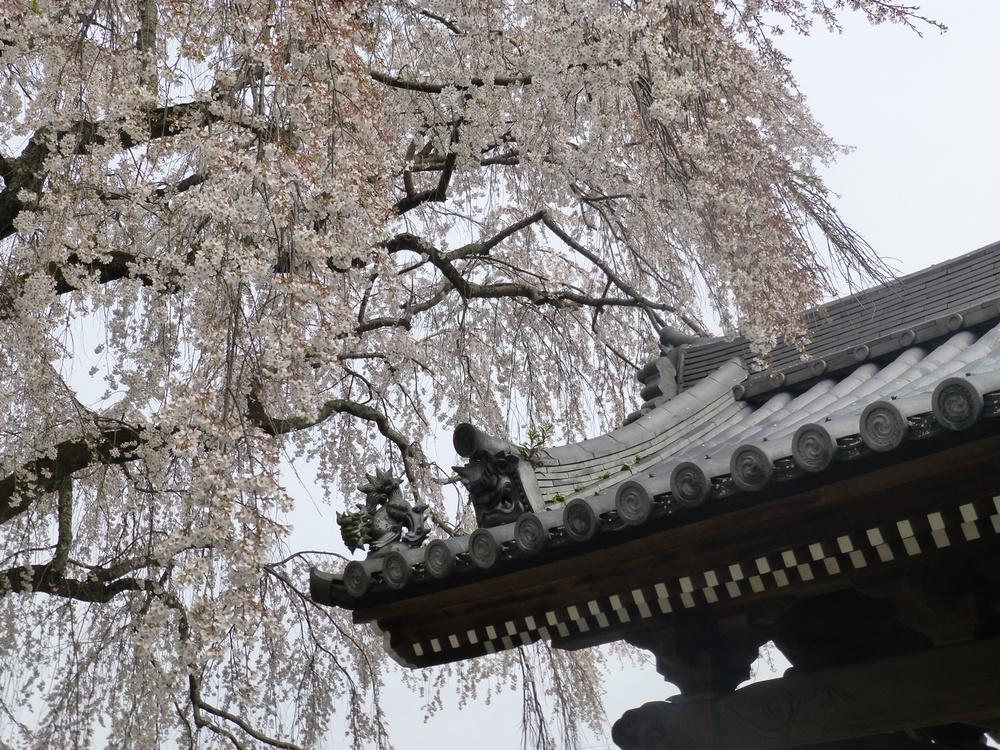Tsuyama-walk-cherrytemple3.jpg
