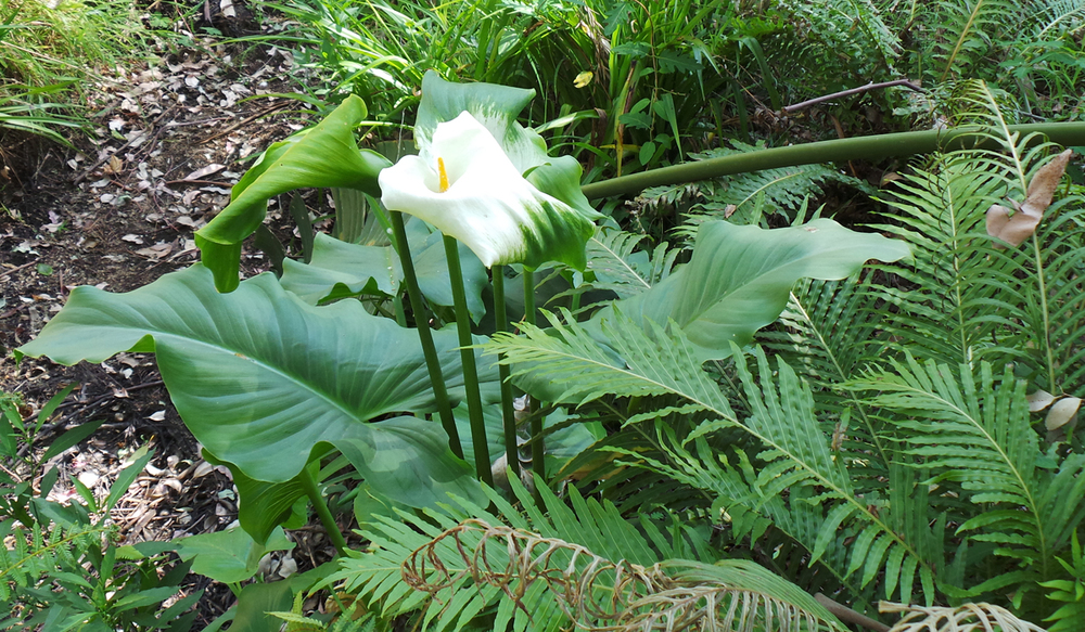 Garden2-3.jpg