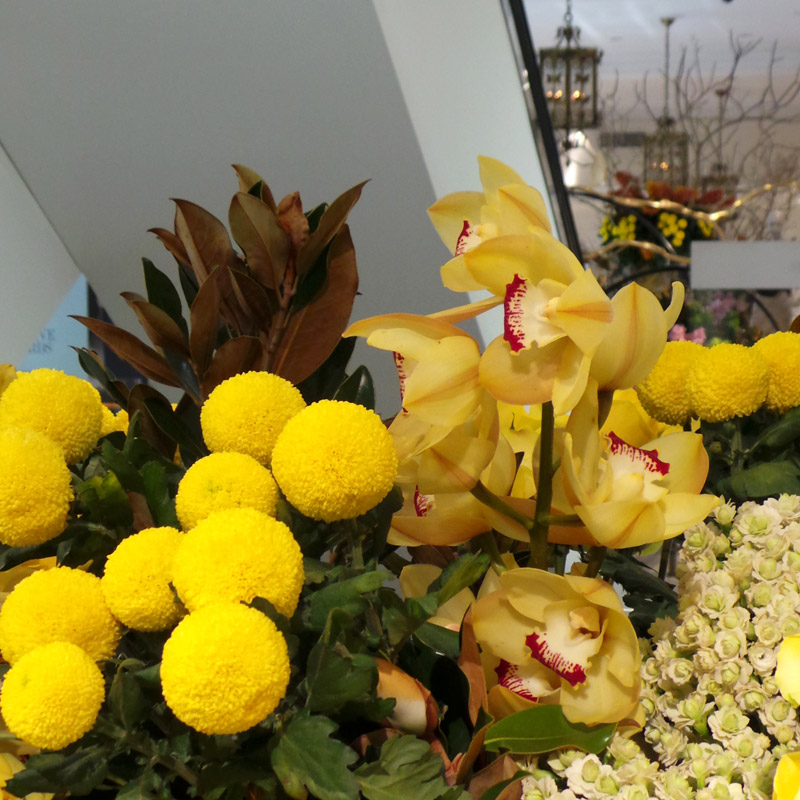 A fabulous cluster of assorted yellows and shapes - how can you not be inspired by this rich variety of floral beauty?
