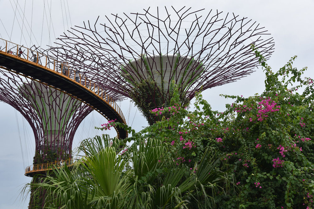 The architectural sky tree formations that are gradually being covered in creeping vines.