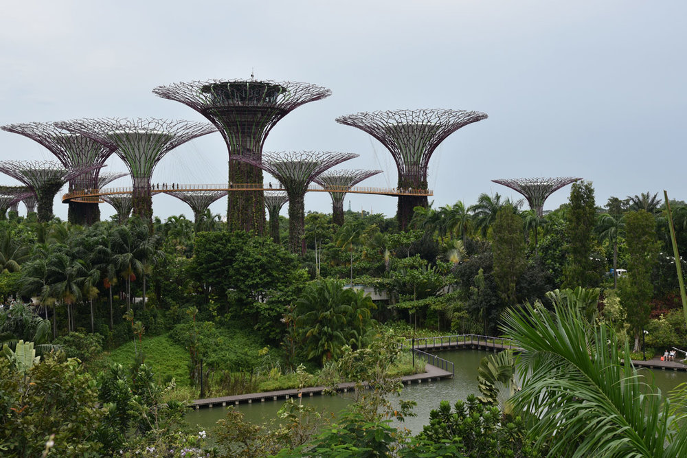 The view from Dragonfly Bridge overlooking Gardens by the Bay