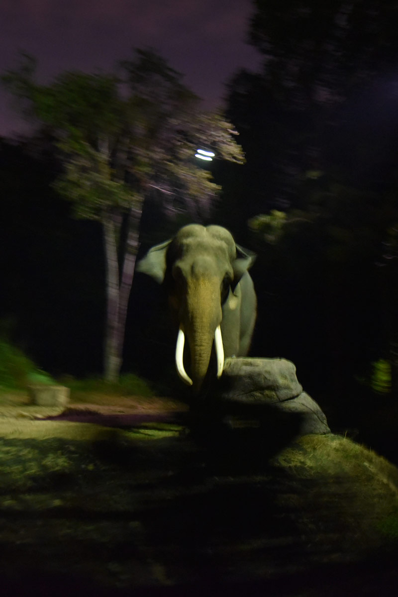 Our next big adventure was to the Singapore Night Safari. There's a train ride through the dark to view some of the animals.