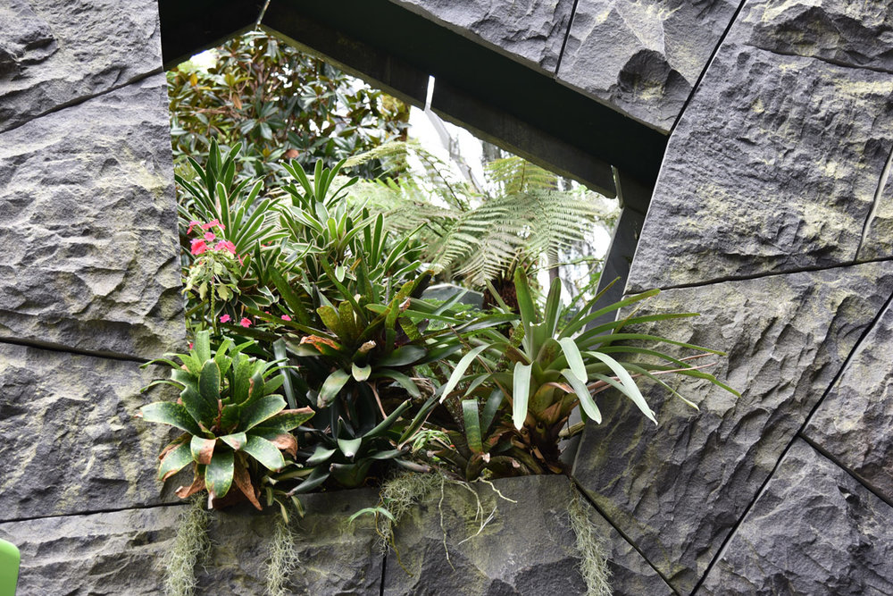 I love how these plants are pushing out of the stone frame, jostling each other for prime position.