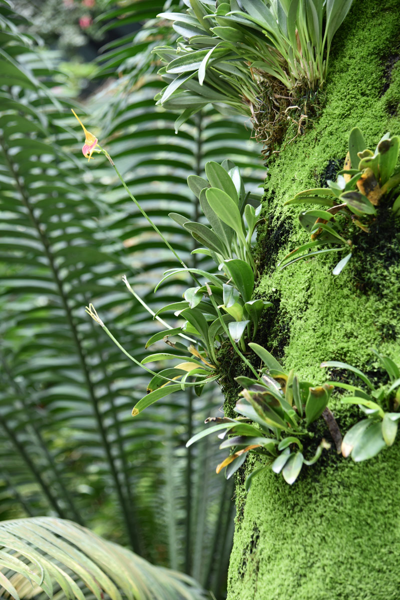 Orchids peek out of mossy walls, broad ferns grow tall and proud in the cool of the Sky Dome