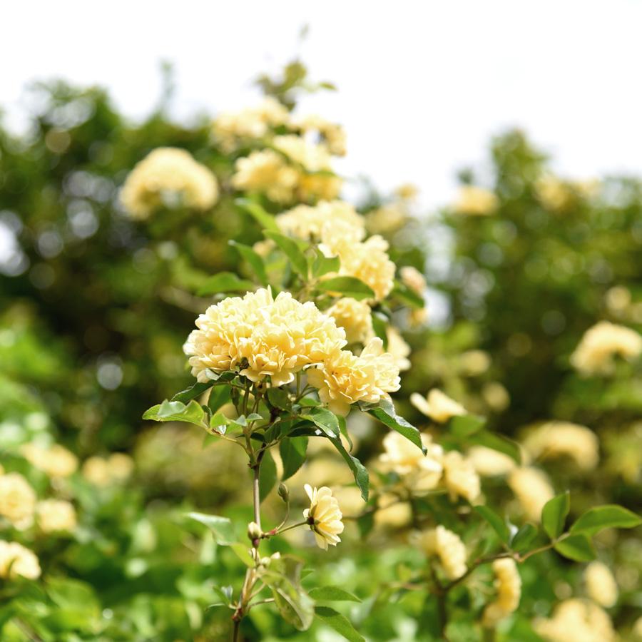 BotanicGardens-3.jpg