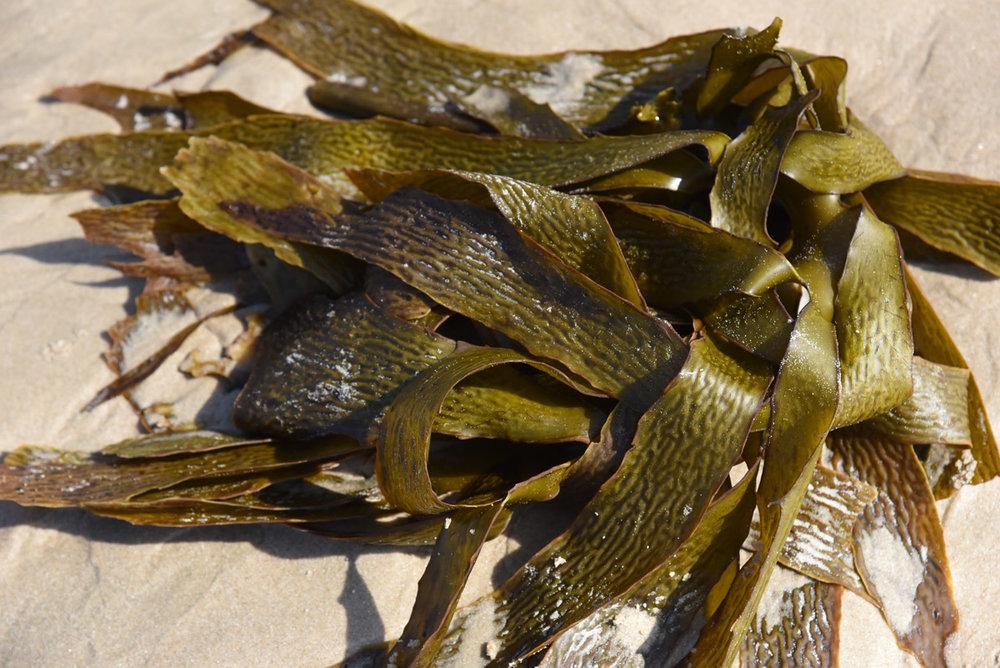 seaweed7.jpg