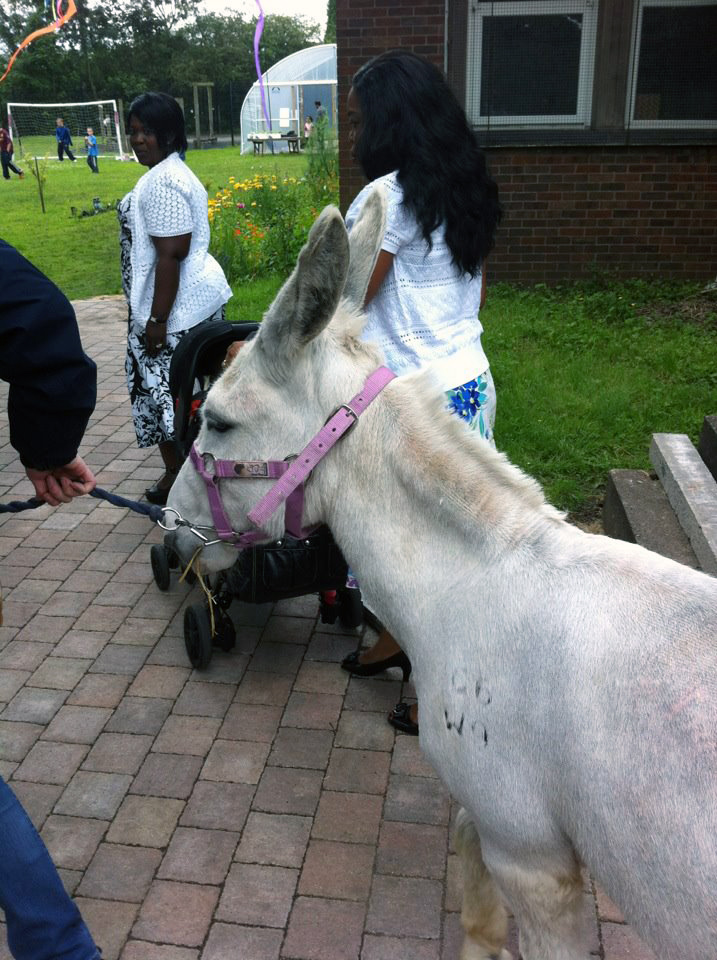Donkey at the Summer Fair