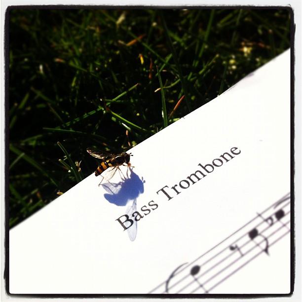 bassbonebee.jpg