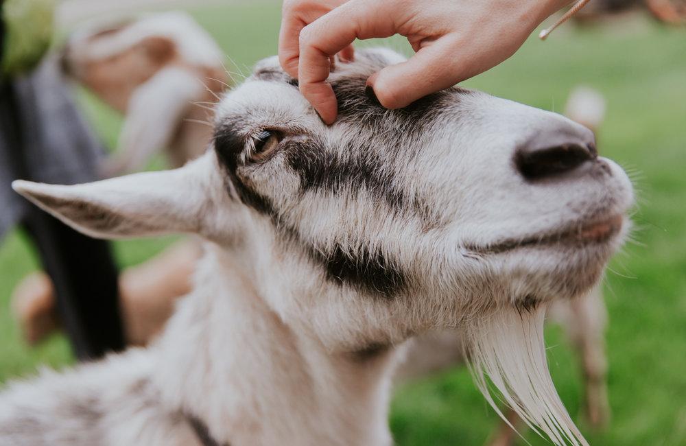 lola-grace-photography-cornman-farms-summer-wedding-49.jpg