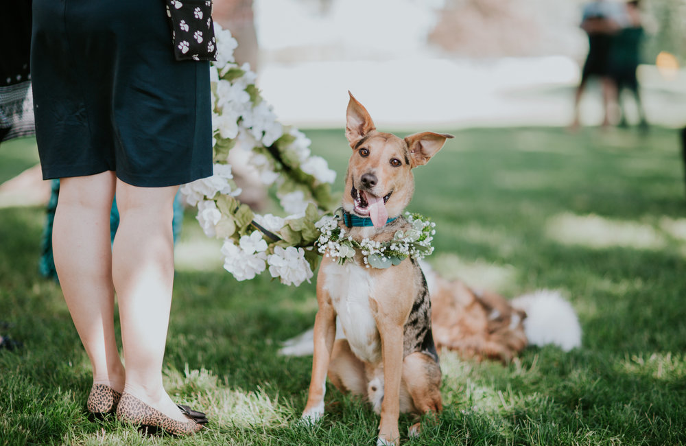 lola-grace-photography-dog-intimate-wedding-14.jpg