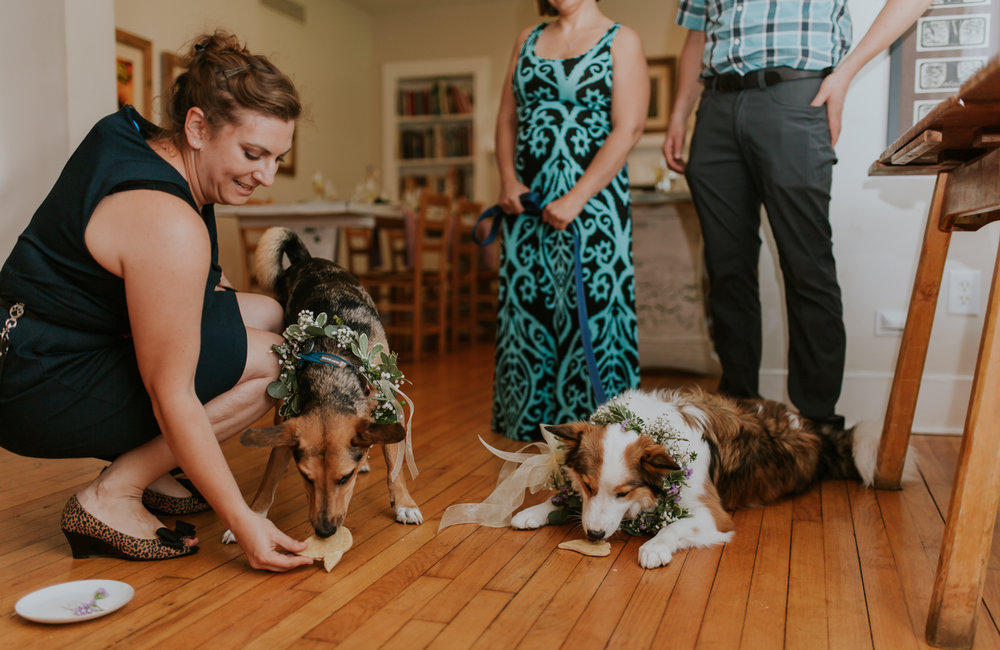 lola-grace-photography-dog-intimate-wedding-26.jpg