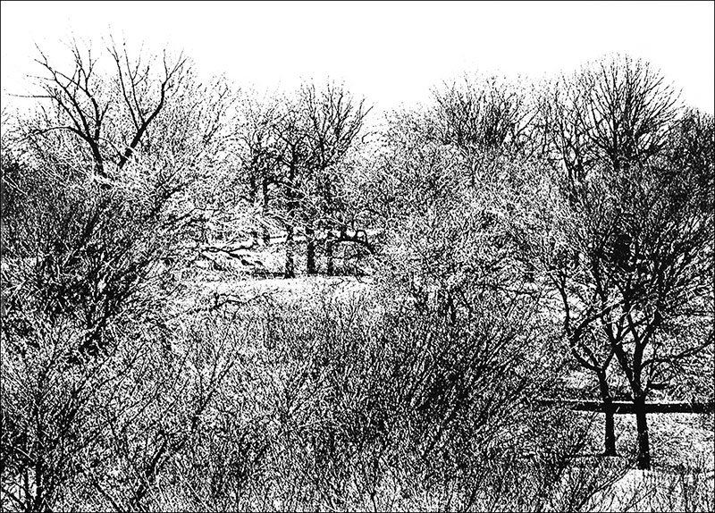 "St. Mary's Park    Photo etching  23"" x 16 1/2""    © 1982 Mary Trevor. All rights reserved."