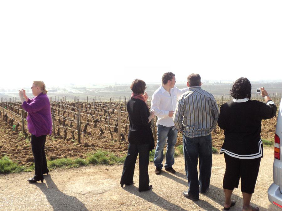 Burgundy vines visit