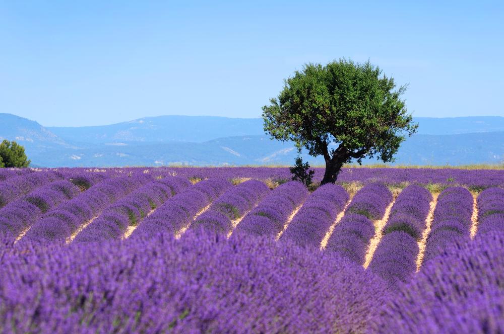 Enjoy the Summer in France