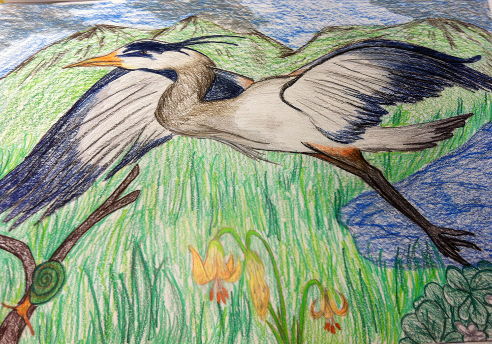 Great blue heron drawing by North Salem High School student Kayla Barnes