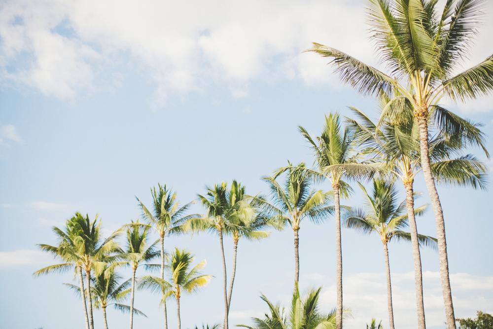 AngieDiaz|MauiWedding211copy.jpg