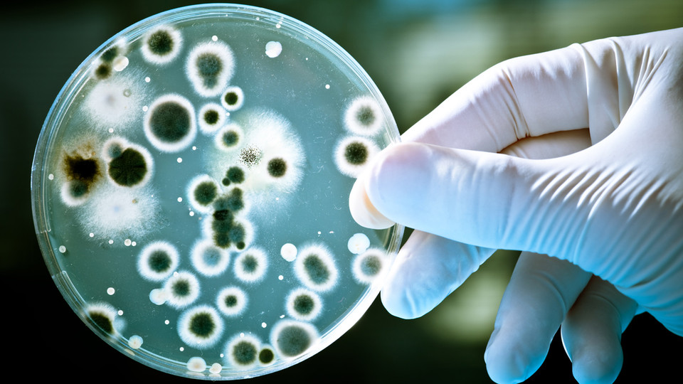 No More MRSA: Nanomedicine Will Destroy Antibiotic-Resistant Bacteria BY ARIEL SCHWARTZ, fastcoexist.com Antibiotics might be one of the miracles of modern medicine, but they're not actually so great. Now, instead of damaging cells, we're just going to blow them up. Humans have made the regret­table mis­take of overus­ing both antibi­otics and… Really cool.