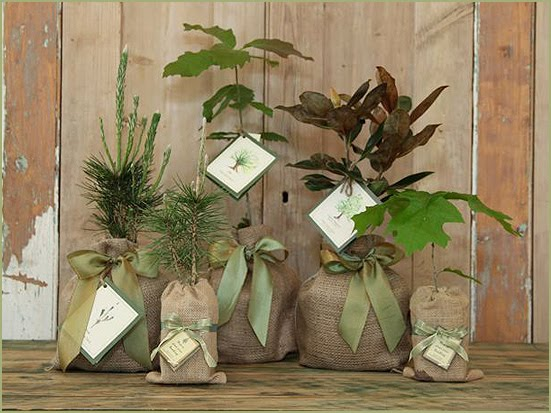 magnolia_company_seedlings_wedding_favors.jpg