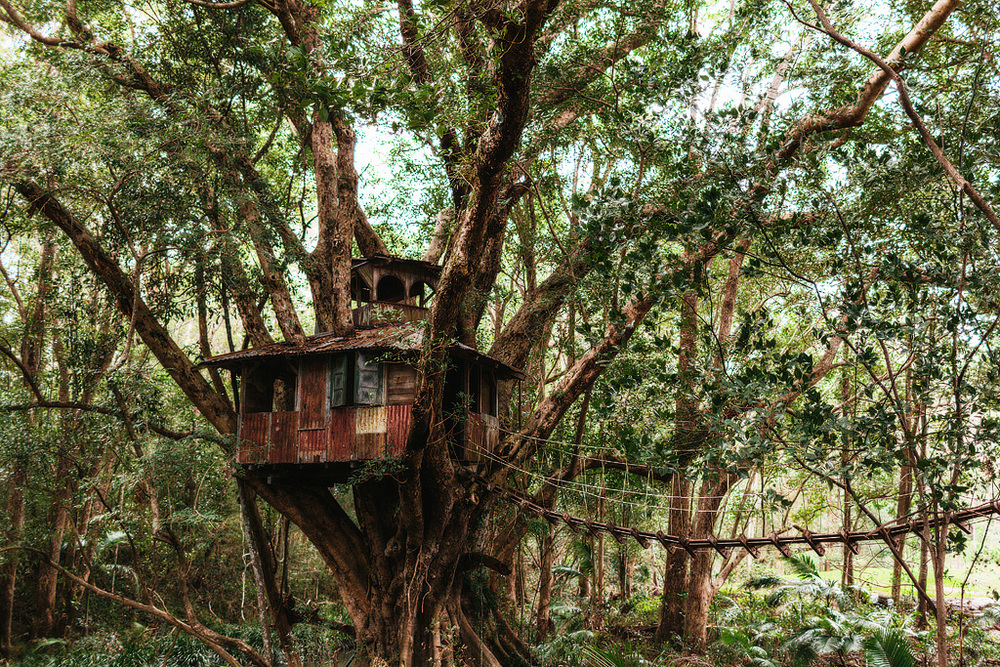 I always love seeing the old tree house!