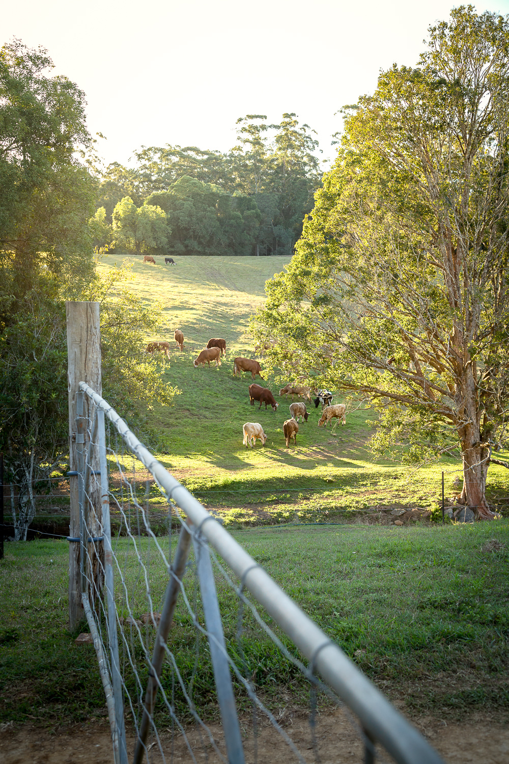 Gold_Coast_Hinterland_Barn_Wedding_Cowbell_Creek_Farm_True_North_Photography-6.jpg