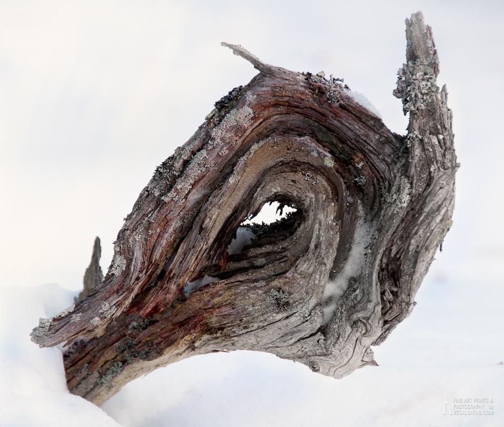 Tree Stump - Nauvo, Archipelago