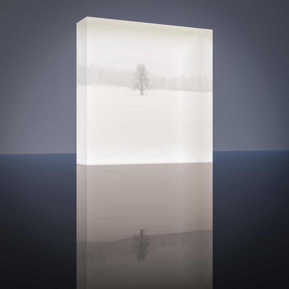 Tammi | Ruissalo, Turku, Finland Taidetuloste Akryylilasilla #1/30  Size: 10 L x 10 K x 3 S [cm] #1/30