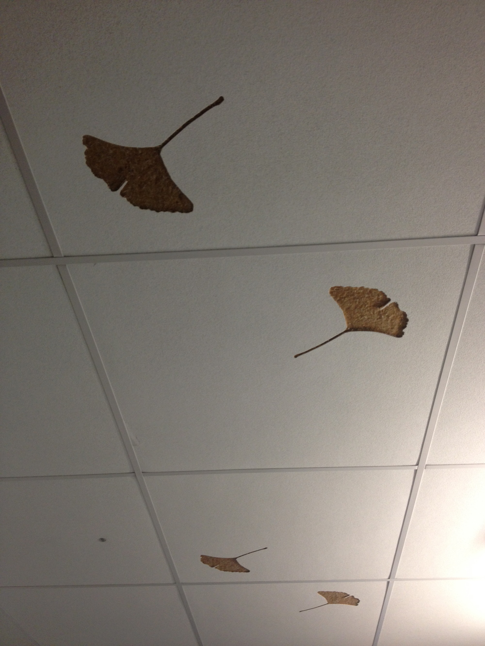 These ceiling tiles in the copy room, an office space notorious for giving off high levels of off-gassing, are made from Ginko leaves. The manufacturer imprinted individuals leaves on these tiles as a reminder of their origins