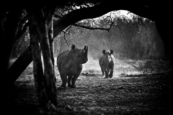 2013 Zimbabwe-014440.jpg