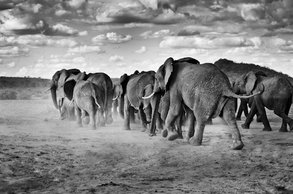 2014 Kenya-017762.jpg