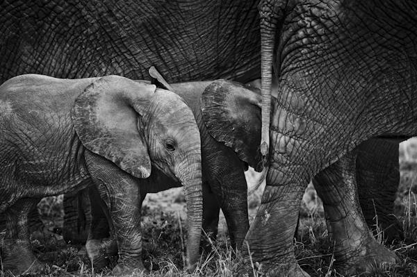 2014 Kenya-018613.jpg