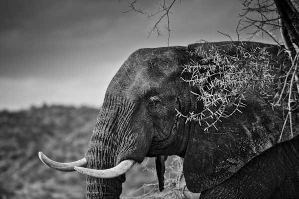 2014 Kenya-018641.jpg