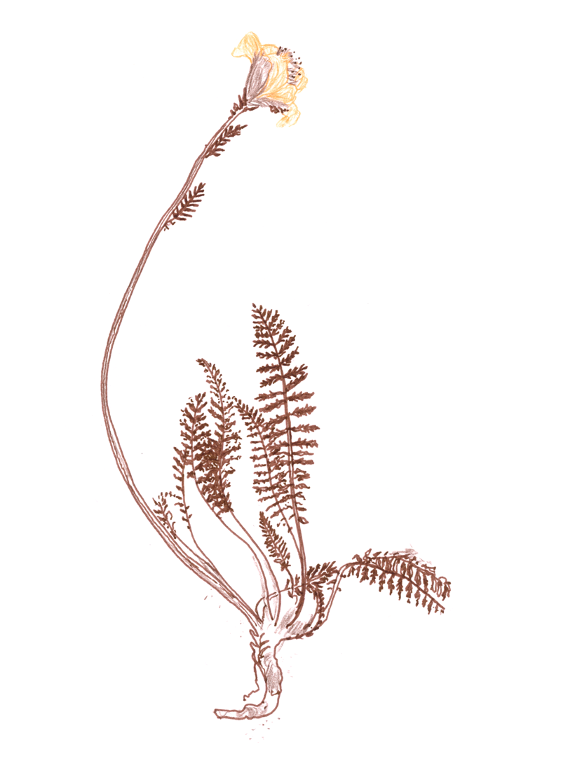 SLBI_flower1.png