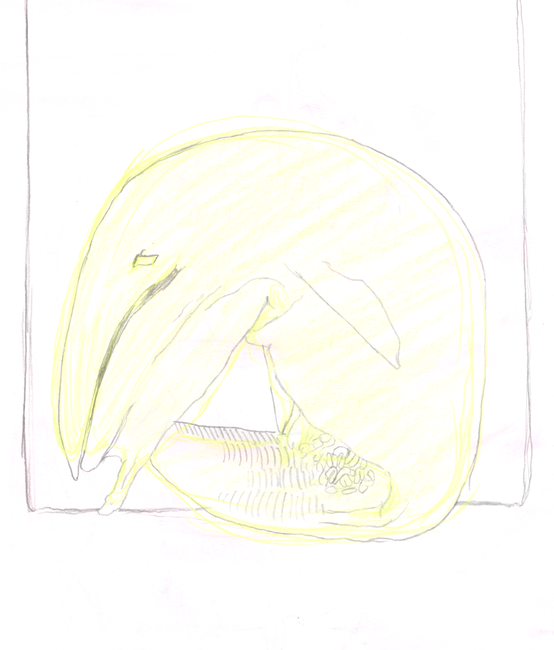 Whale Foetus