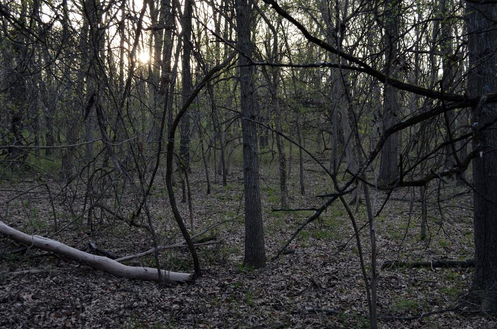 dead trees2.jpg