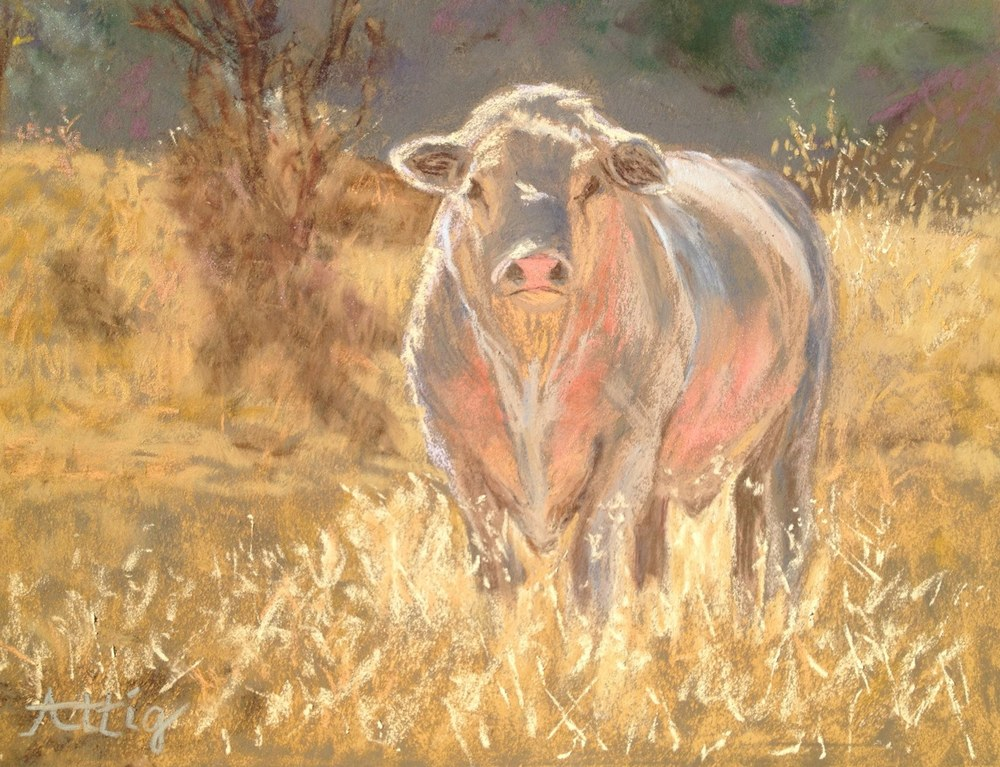 "Day 2: ""Charolais Bull, Blue Moon Ranch"" 9"" x 12"" $495"