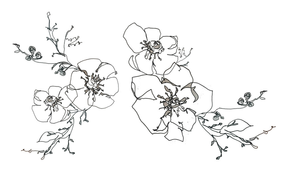 Website_flower_contours.jpg